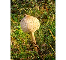 White Toadstool 5 Photographic Print