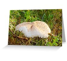 White Toadstool 7 Greeting Card