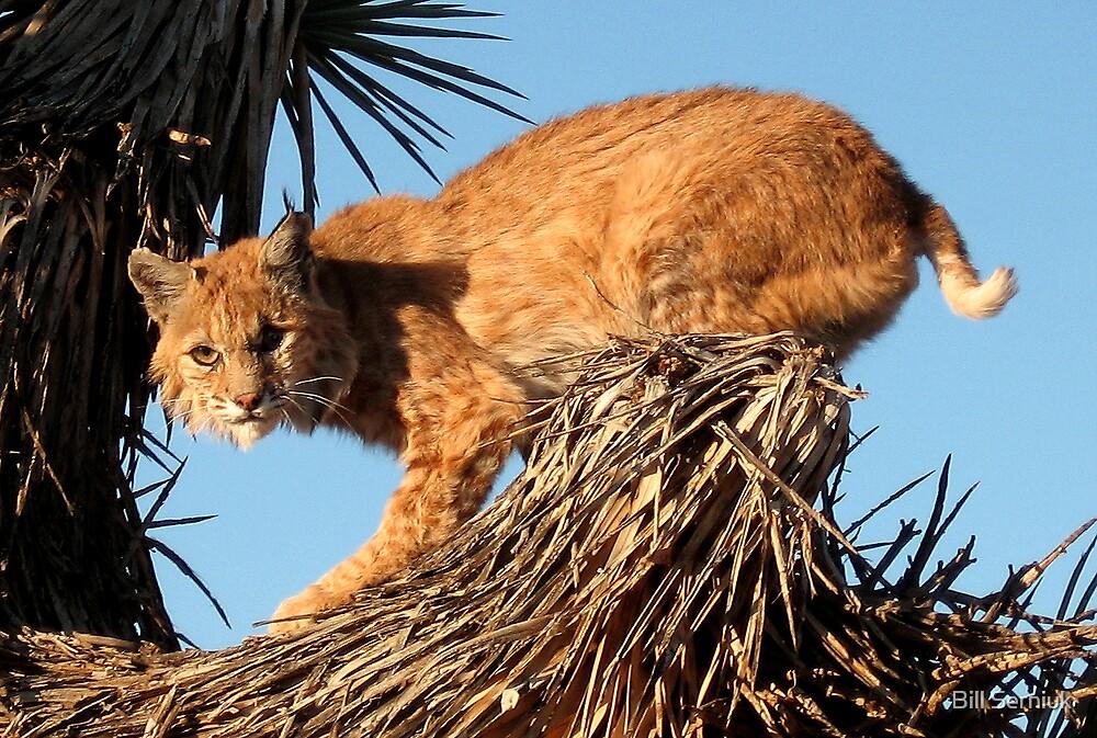 Lynx by Bill Serniuk