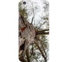 Bottom View of Pine Tree iPhone Case/Skin