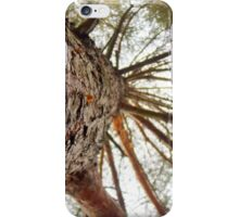 Bottom View of Pine Tree 2 iPhone Case/Skin