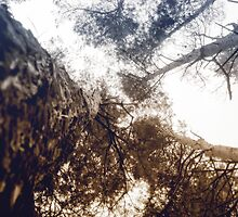 Bottom View of Pine Tree 4 by AnnArtshock