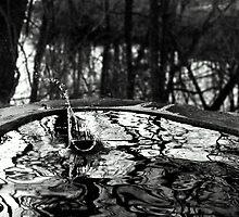 Water or Rock? by Eliezer Defaria