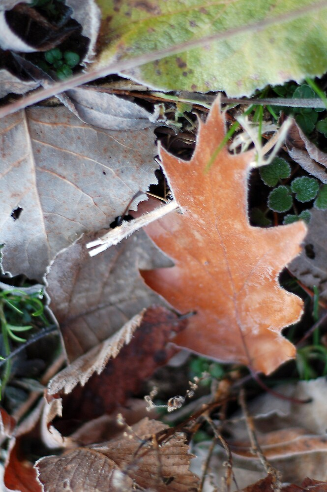 Winter Leaves by Justin Leveque