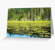 Oregon Swamp Greeting Card