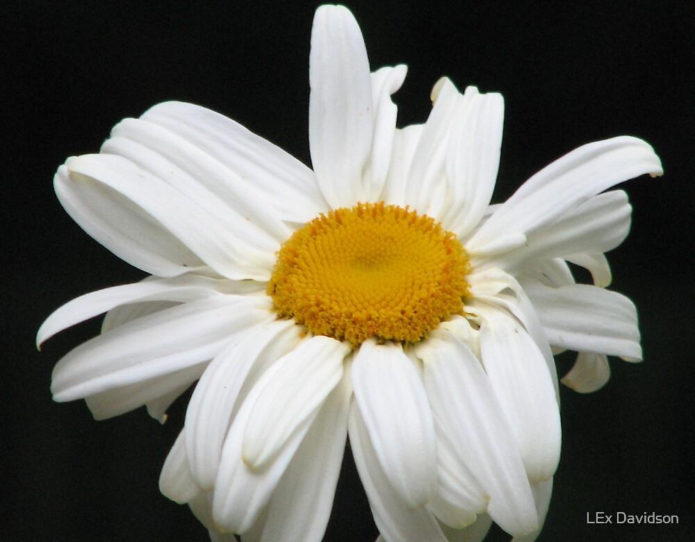Flower  by LEx Davidson