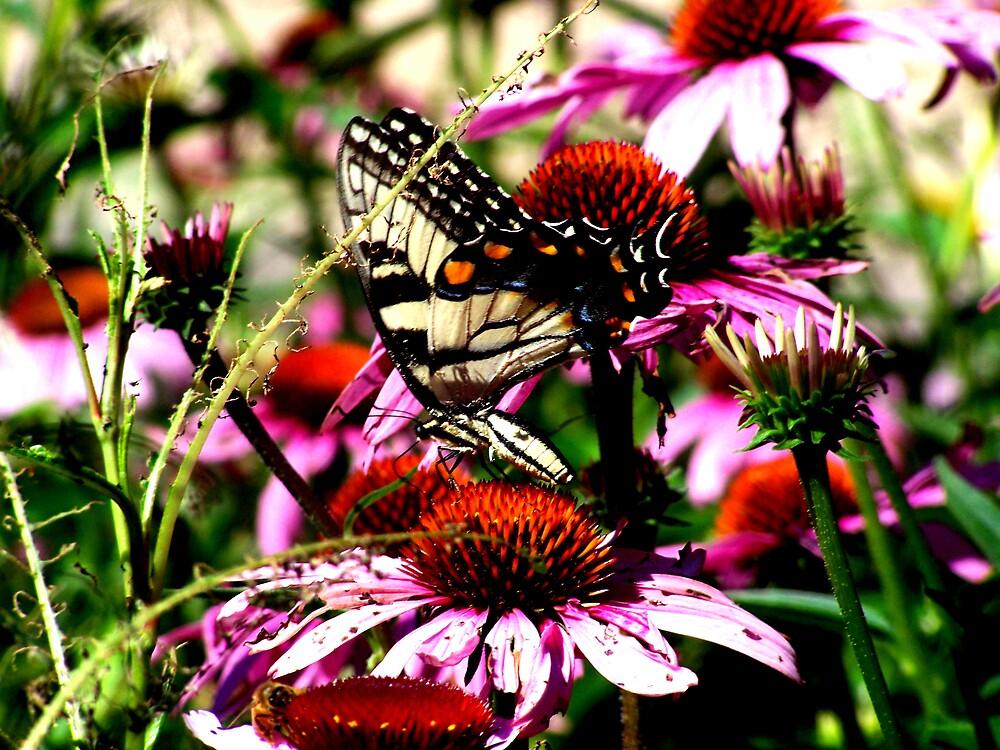 Butterfly Butterfly, Fly away home! by mshopalong