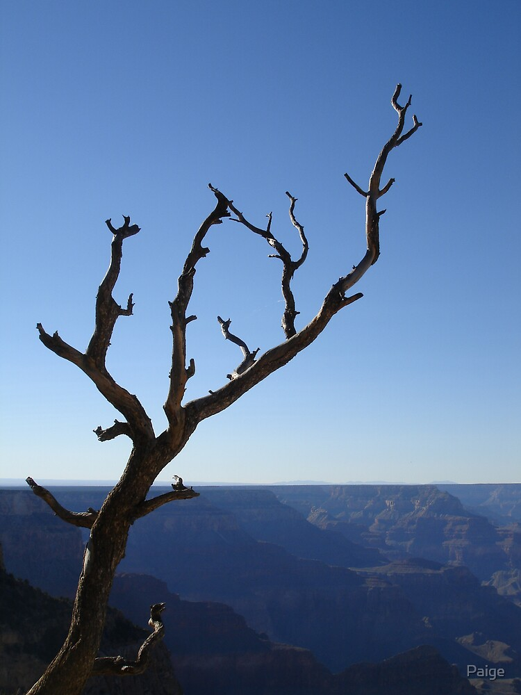 Grand Canyon Wonder by Paige