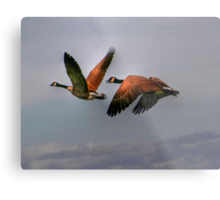 Canada Geese In Flight Metal Print