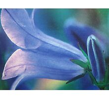 bluebell - wales Photographic Print