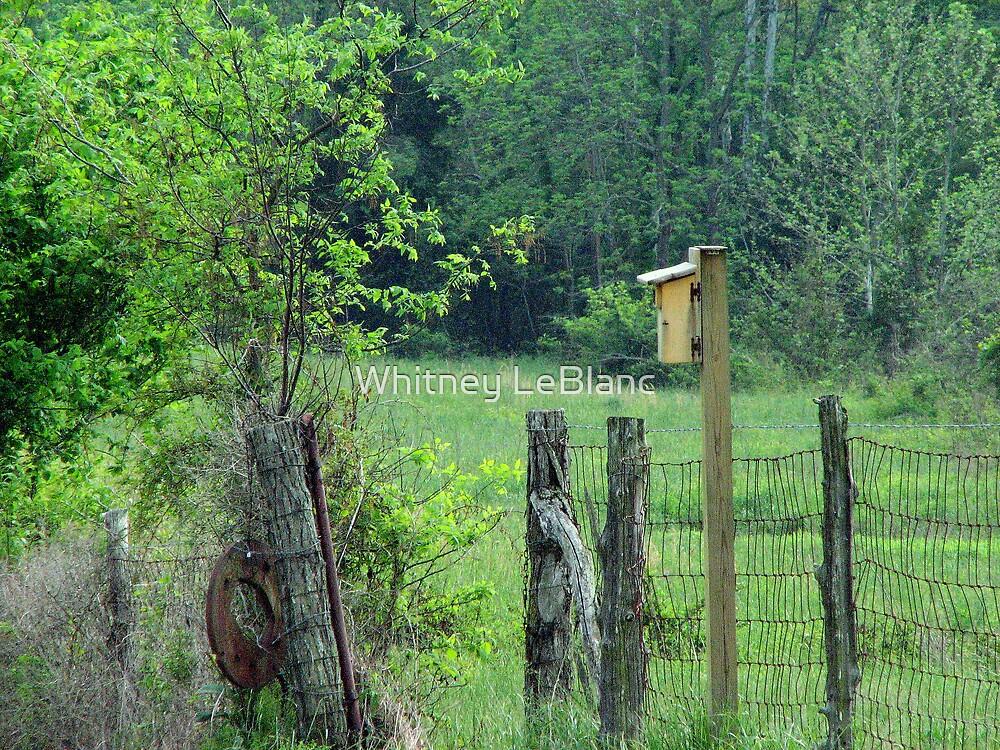 birdhouse by Whitney LeBlanc