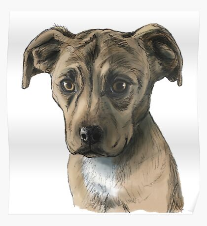 Brown Pit Bull Puppy Drawing Poster