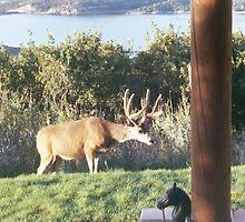 Buck Deer by jkyody