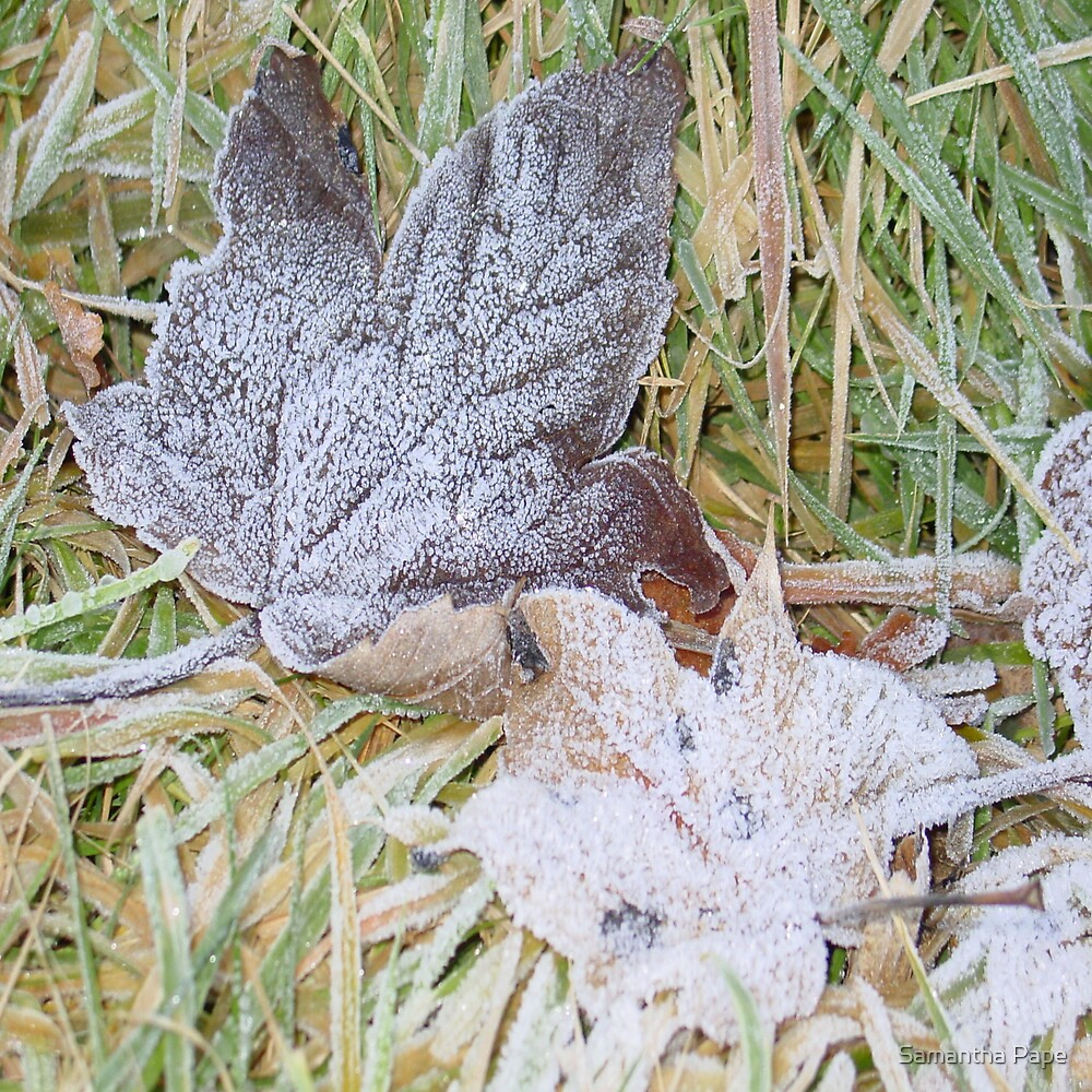 Autumn Frost by Samantha Pape