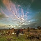 Pony on the heath by nick board