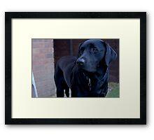 Jet, Labrador Retriever Framed Print