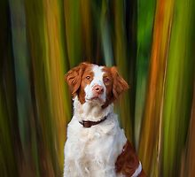 Beautiful Brittany by Helen Green