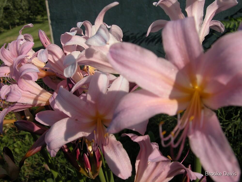 Surprise Lilies by Brooke Davis