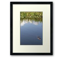 GATOR ALLEY Framed Print