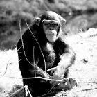 Monkey Business by Paige