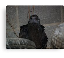 Turkey Vulture  Punk Look Canvas Print