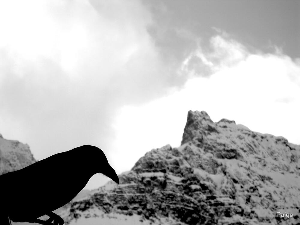 Black Raven by Paige
