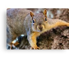 How many peanuts do you have lady? Canvas Print