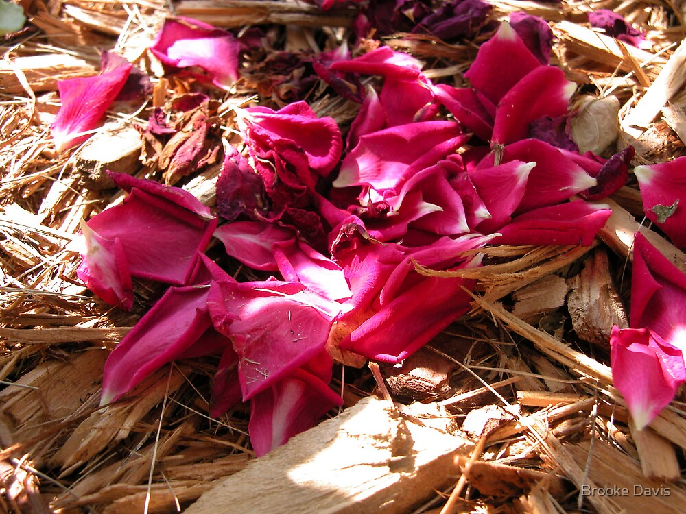 Rose Petals by Brooke Davis
