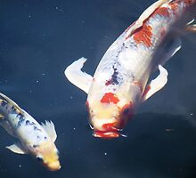 Koi by 313 Photography