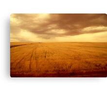 Amber field 1 Canvas Print