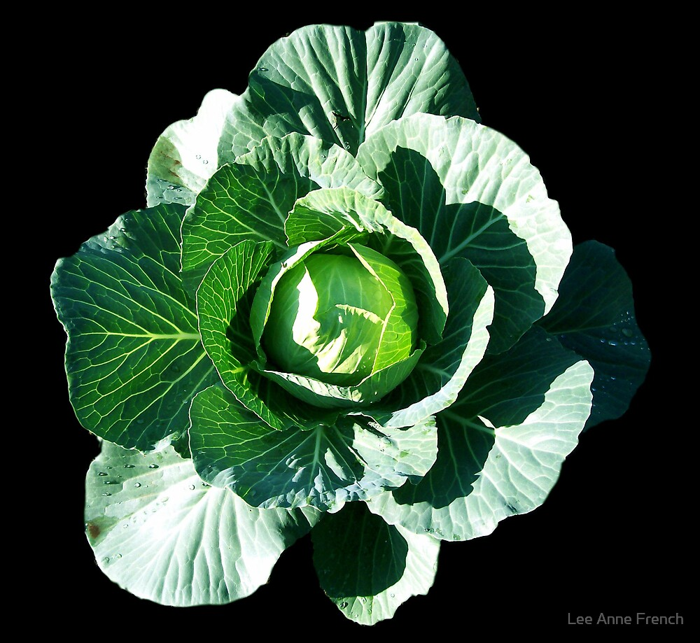 Cabbage Blossom by Lee Anne French