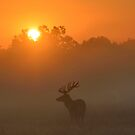 Oh deer, what a beautiful sunrise! by Kasia Nowak
