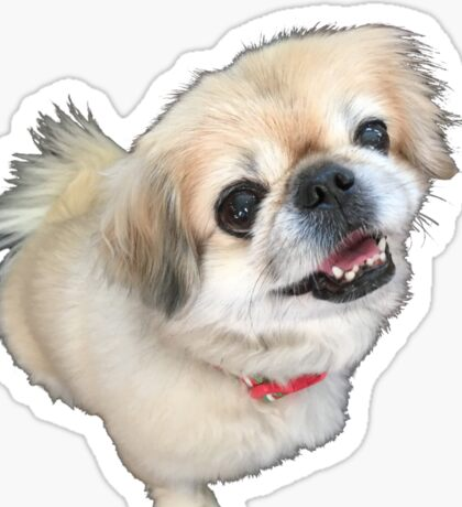 Lucy fur Real - adorable pekingese dog Sticker