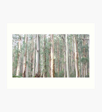 Eucalyptus Regnans Forest Art Print