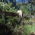 Australian Bush Country post-and-rail fence by Stephen  Shelley