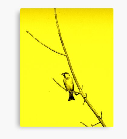 Bird Gazing Up In A Tree Canvas Print