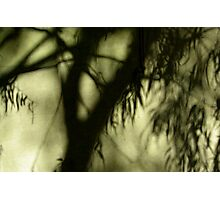 Eucalypt on Canvas Photographic Print