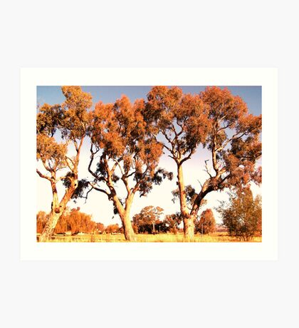 Outback trees Art Print