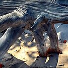 Driftwood I by andreisky