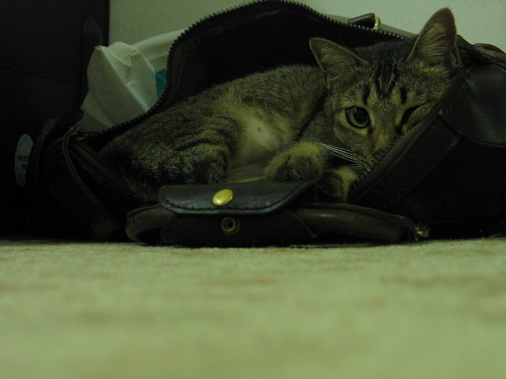 cat in a bag by twosouls