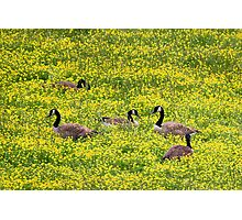Springtime Gathering Photographic Print