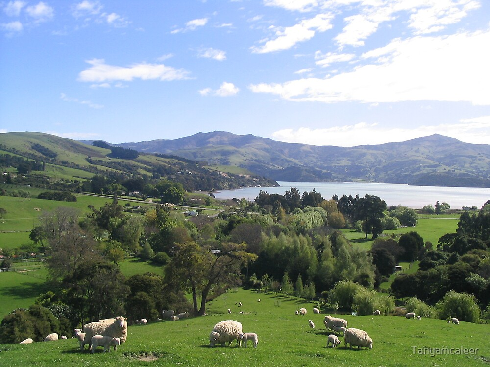 Akaroa View, New Zealand by Tanyamcaleer