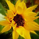 Sunflower by ElsT