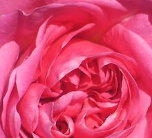 rose by Simone  Mitchell