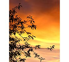 Sunset on the Sand Photographic Print