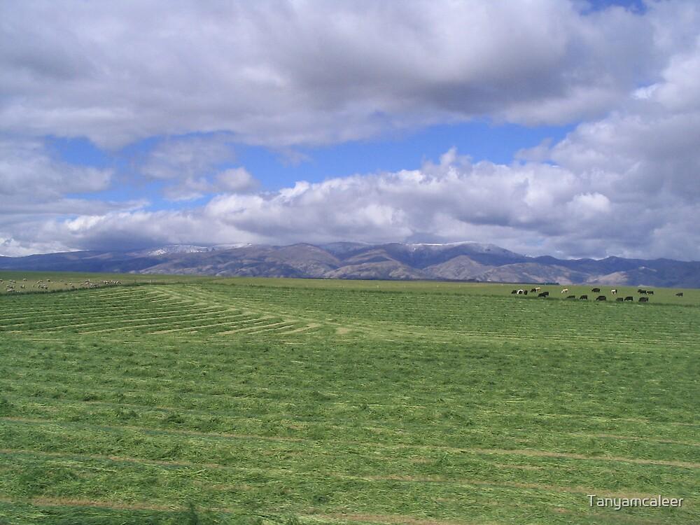 Farmland in Wanaka, New Zealand by Tanyamcaleer