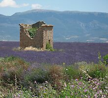 Lavendar and wild flowers in South of France by Richard3