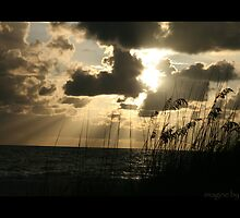 Clearwater Gold by Gaia Vision