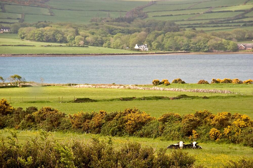 Irish Countryside, Dingle, Ireland by ThomasMaher