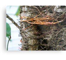 creepy roots Metal Print